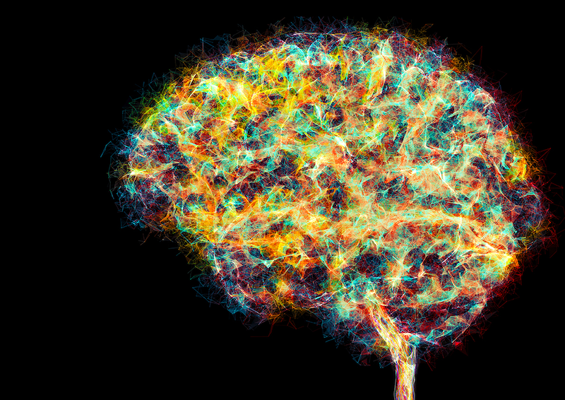 The Circuitry of Creativity: How Our Brains Innovate Thinking