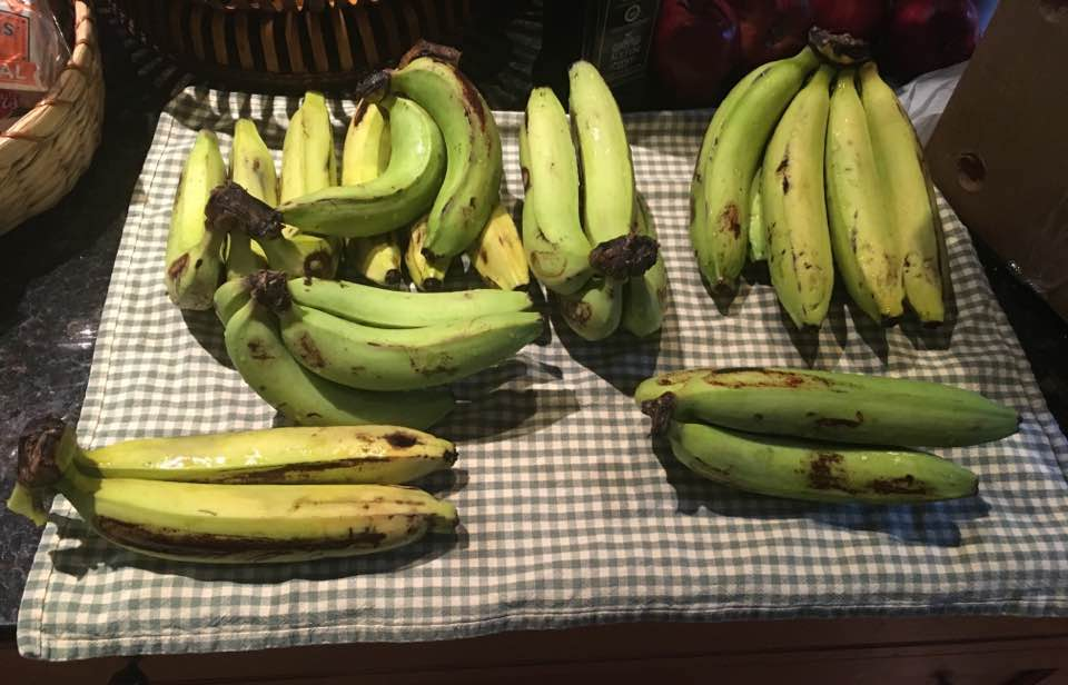 How Synthetic Biologists Could Save the Cavendish Banana from the Brink of Collapse